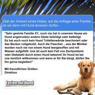 hund_im_hotel