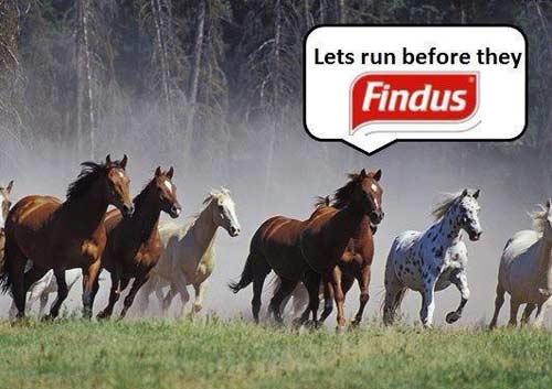 Pferdewitz Findus - Social Media